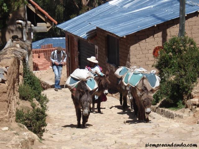 Los burros, el principal medio de transporte.