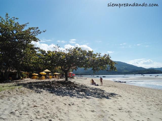 El árbol que me recubrió en la playa de Jabaquara.