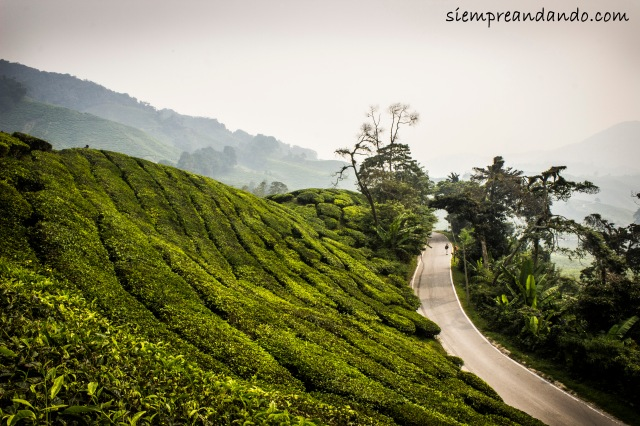 Cameron Highlands (2015).