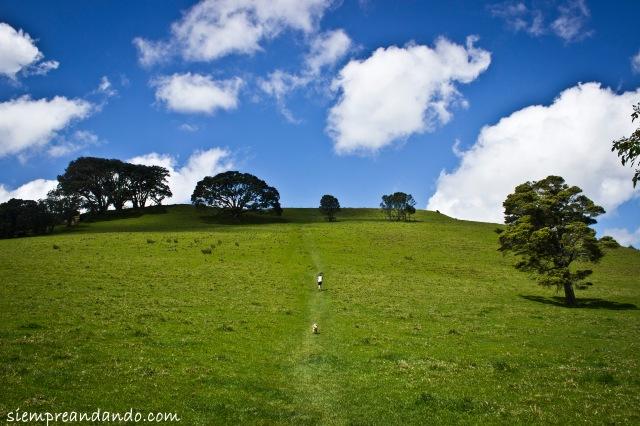 Mount Eden, Auckland.
